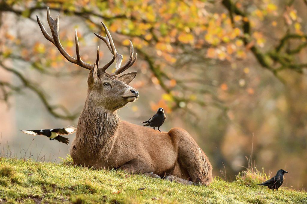 Rozprávka o rodovo neutrálnom jeleňovi? Do knihy patrí upozornenie, rozhodli v Maďarsku