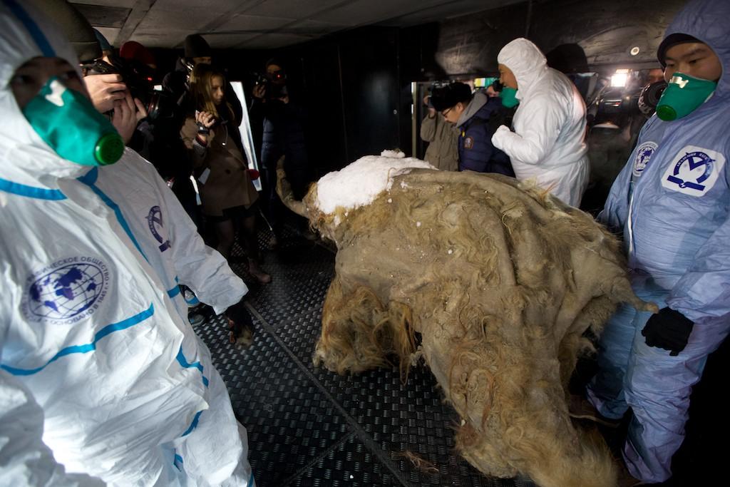 Ruské laboratórium ide  skúmať vírusy z čias mamutov, môžu byť nebezpečné