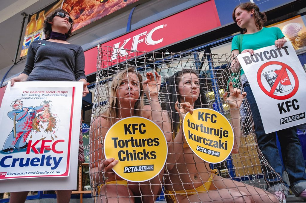 Zvieracie prirovnania sú urážlivé, podporuje to nadradenosť ľudí, hlása mimovládka PETA