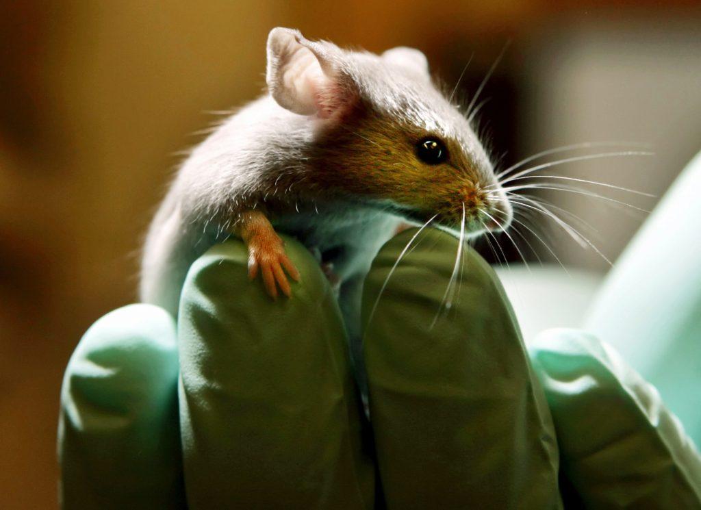 Úspešné slovenské testovanie Sputnika: Myši a morčatá neuhynuli