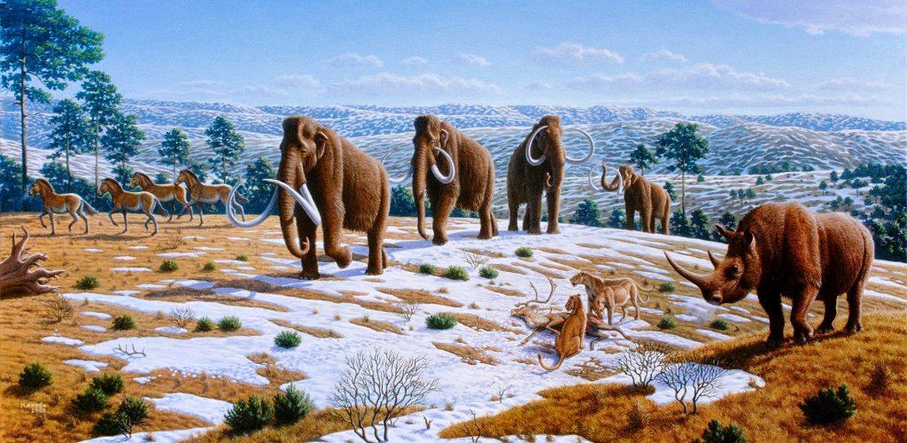 Nový pohľad na vývoj človeka: mozgy nám rástli úmerne s vymieraním megafauny