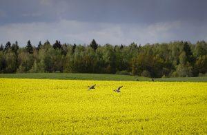 Mičovský ocenil petíciu Za živú krajinu. Ekologickejšie poľnohospodárstvo chce dvadsaťtisíc ľudí