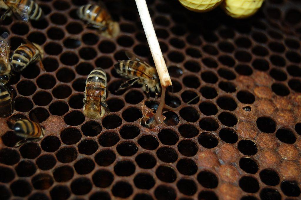Mor včelieho plodu: Kedy spozornieť a ako sa ho vyvarovať